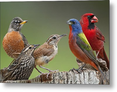 Backyard Buddies Metal Print