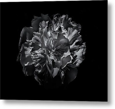 Backyard Flowers In Black And White 25 Metal Print by Brian Carson