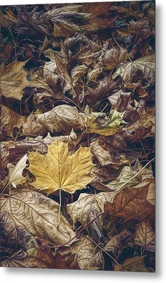 Backyard Leaves Metal Print by Scott Norris