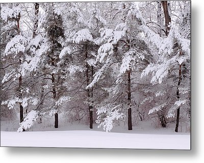 Metal Print featuring the photograph Backyard Trees by Don Nieman