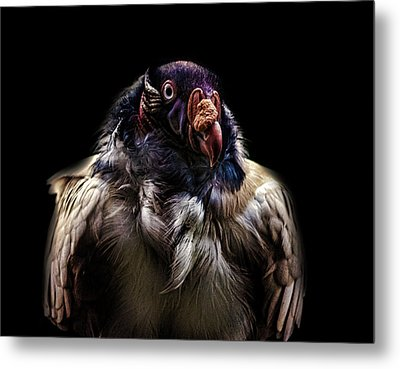 Bad Birdy Metal Print by Martin Newman