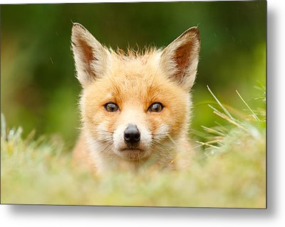 Bad Fur Day - Fox Cub Metal Print by Roeselien Raimond