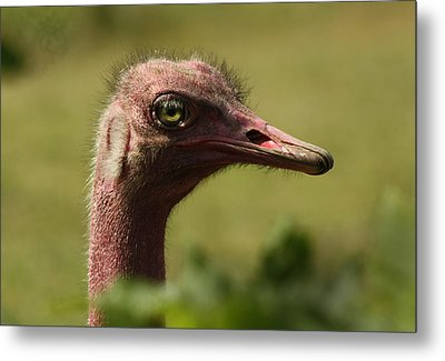 Bad Hair Day Metal Print by Barbara  White