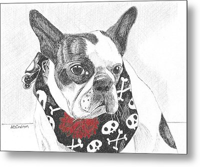 Metal Print featuring the drawing Bad To The Bone by Arlene Crafton