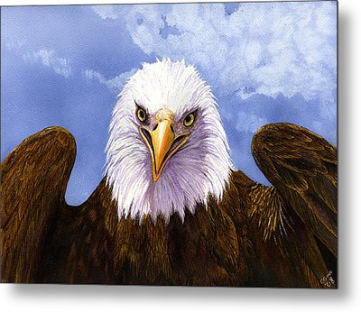 Bald Eagle Metal Print by Catherine G McElroy