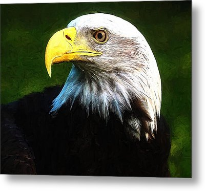 Bald Eagle Face Metal Print by Dan Sproul