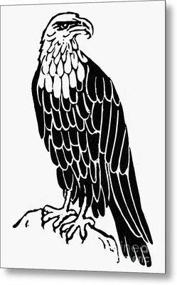 Bald Eagle Metal Print by Granger