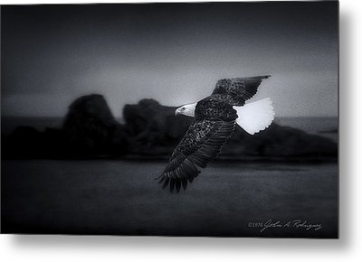 Metal Print featuring the photograph Bald Eagle In Flight by John A Rodriguez
