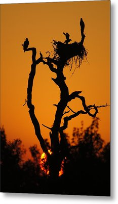 Metal Print featuring the photograph Bald Eagle Nestling At Sunset by Lynda Dawson-Youngclaus