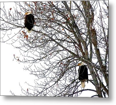 Metal Print featuring the photograph Bald Eagle Pair by Will Borden