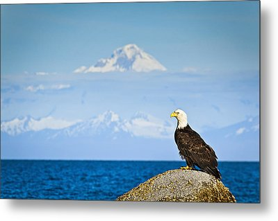 Bald Eagle Perched On A Rock Metal Print by Sunny Awazuhara- Reed