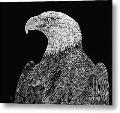 Bald Eagle Scratchboard Metal Print