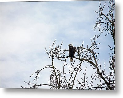 Metal Print featuring the photograph Balk Eagle by Rebecca Cozart