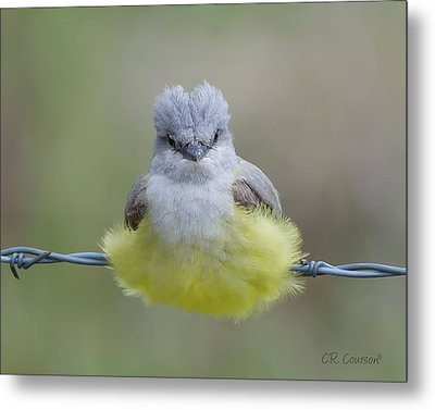 Ball Of Fluff Metal Print by CR  Courson