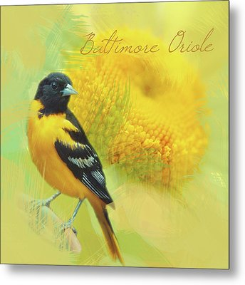 Metal Print featuring the photograph Baltimore Oriole Watercolor Photo by Heidi Hermes