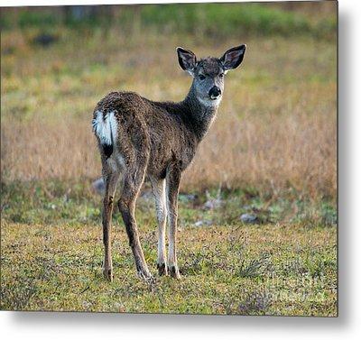 Bambi Metal Print by Mike Dawson