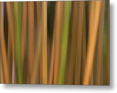 Metal Print featuring the photograph Bamboo Abstract by Carolyn Dalessandro