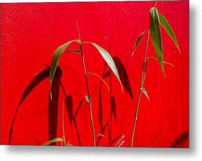 Bamboo Against Red Wall Metal Print