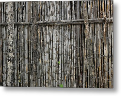 Bamboo And Barbed Wire Fence Metal Print