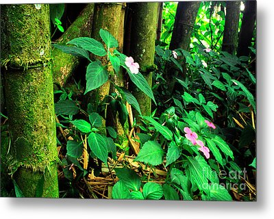 Bamboo And Impatiens El Yunque National Forest Metal Print by Thomas R Fletcher