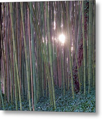 Bamboo And Ivy Metal Print
