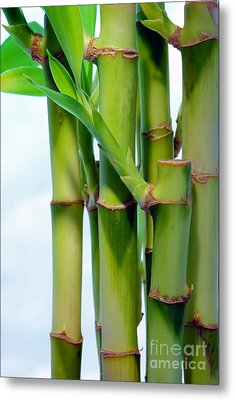 Bamboo And Sky Metal Print by Olivier Le Queinec