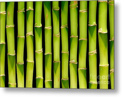 Bamboo Bamboo Bamboo Metal Print by Olivier Le Queinec