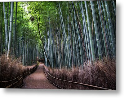 Bamboo Forest Entrance Metal Print