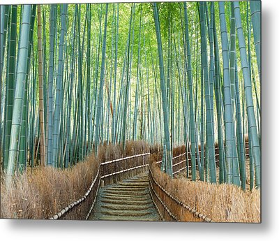 Bamboo Forest, Kyoto City, Kyoto Metal Print by Panoramic Images