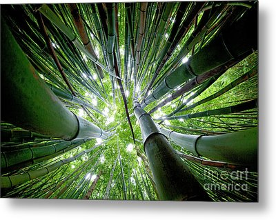 Bamboo Forest Maui  Metal Print by Monica and Michael Sweet
