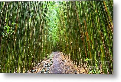 Bamboo Forest Trail Hana Maui 2 Metal Print by Dustin K Ryan