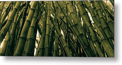 Bamboo Metal Print by Hudson Marsh