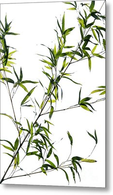 Bamboo Leaves Metal Print by Tim Gainey