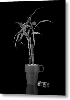 Bamboo Plant Metal Print by Tom Mc Nemar