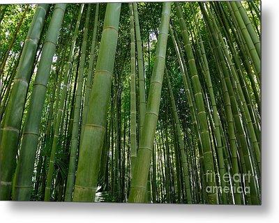 Bamboo Plantation Metal Print by Sami Sarkis