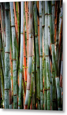 Bamboo Seduction II Metal Print by Karen Wiles