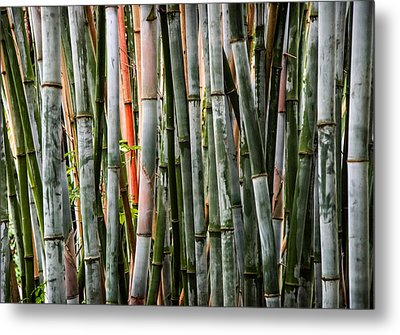 Bamboo Seduction Metal Print by Karen Wiles