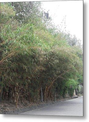 Bamboo Street Metal Print
