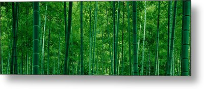 Bamboo Trees In A Forest Metal Print by Panoramic Images