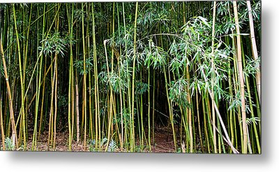 Bamboo Wind Chimes  Waimoku Falls Trail  Hana  Maui Hawaii Metal Print by Michael Bessler