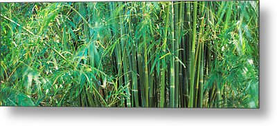 Bamboos In A Forest Metal Print by Panoramic Images
