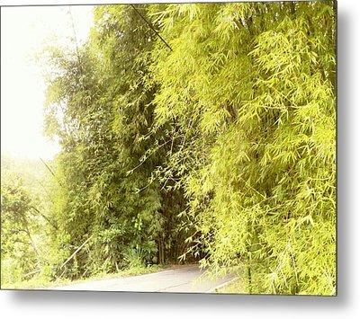bambu en Limani, Adjuntas Metal Print