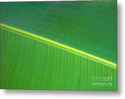 Banana Leaf Metal Print by Dana Edmunds - Printscapes