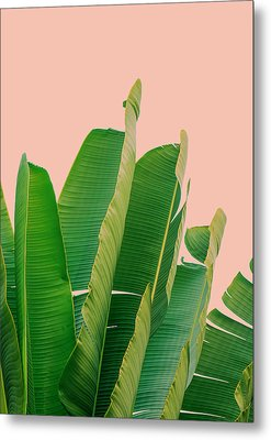 Banana Leaves Metal Print by Rafael Farias