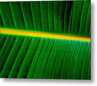 Banana Plant Leaf Metal Print