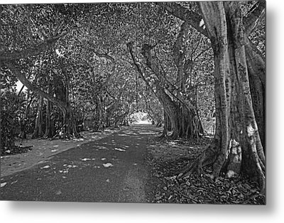 Banyan Street 2 Metal Print by HH Photography of Florida
