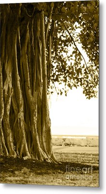 Banyan Surfer - Triptych  Part 2 Of 3 Metal Print
