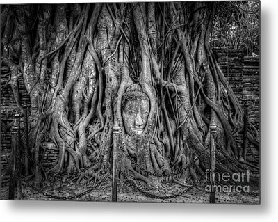 Banyan Tree Metal Print by Adrian Evans