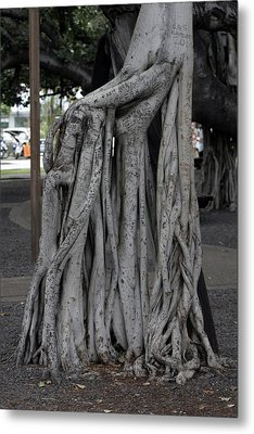 Banyan Tree, Maui Metal Print