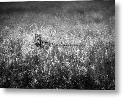 Barb Wire Fence Metal Print